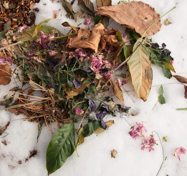 Compost Composition: Dried Flowers
