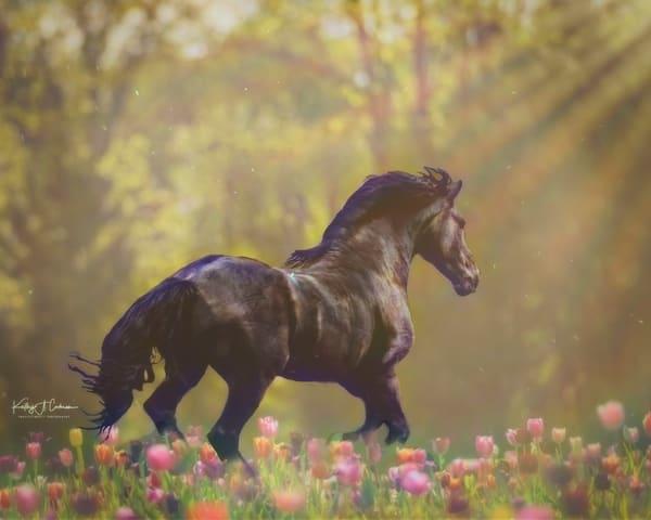 Tulip Fantasy  Photography Art | Images2Impact