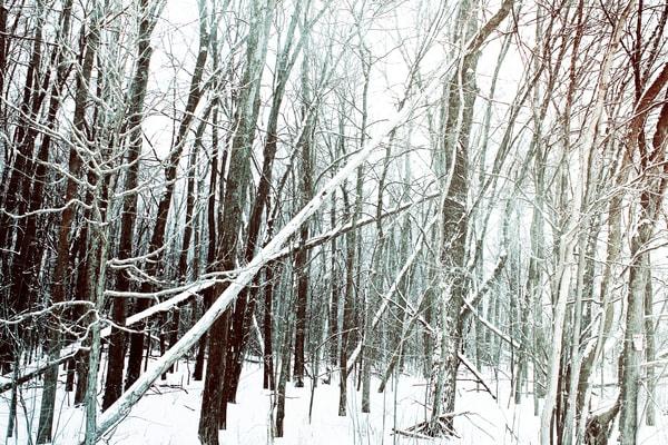 The Healing Trees