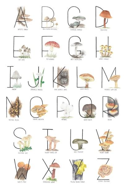 Mushroom Alphabet