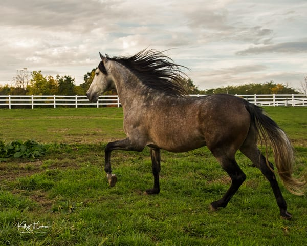 Afternoon Prance Photography Art | Images2Impact