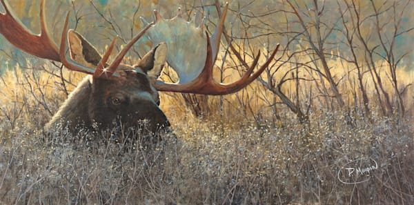 Art, Paintings, Wildlife, animals, ducks, birds, moose