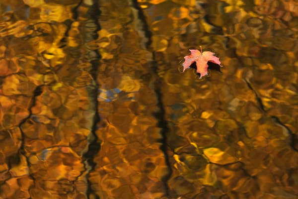 seasonal weather, tree branches and tree species, fall leaves, art photographs of water, therapeutic art photography,