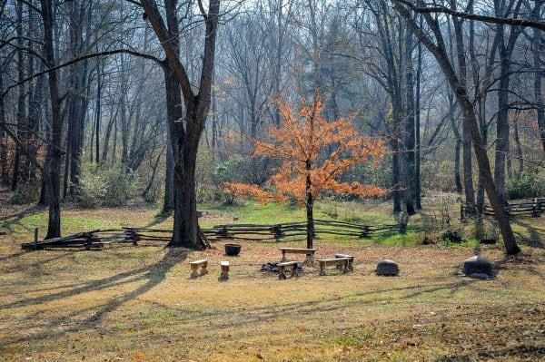 Vance Birthplace Tree