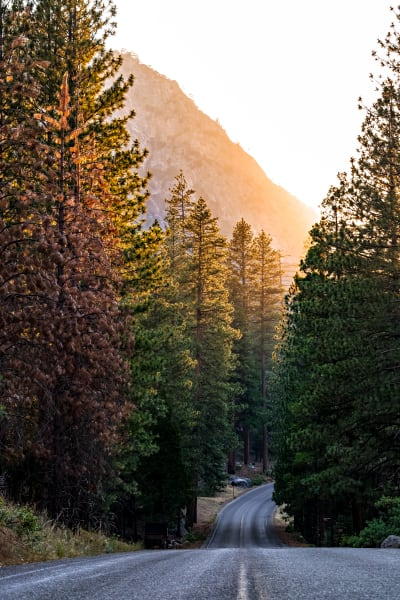 Sunset Through The Trees Over Highway 180 Photograph For Sale As Fine Art