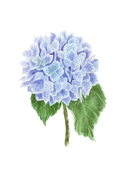 Hydrangea Original Watercolor Painting