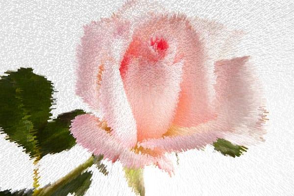 Exploding Pink Rose 6108