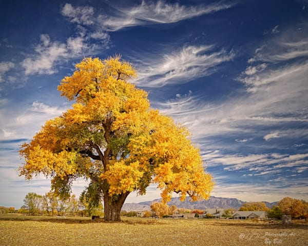 Fine Art Photographs of LoneGoldenCottonwood | d'Ellis PhotographicArt by Bill