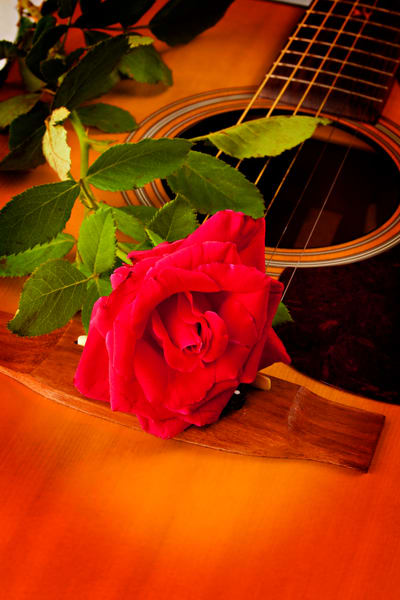Red Rose Acoustic Guitar Image in color