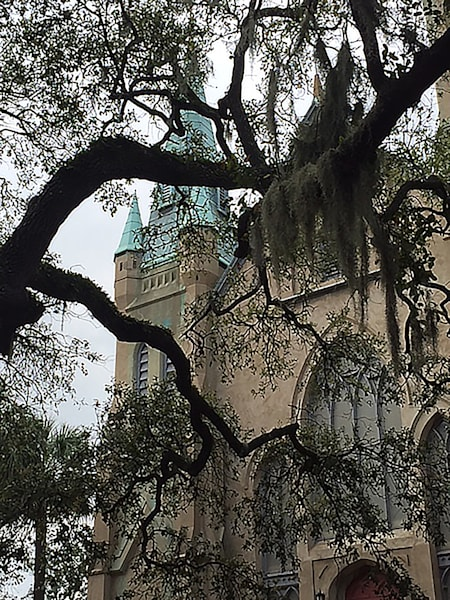 Savannah Church with Mossy Trees