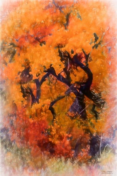 Fall Impressions Photography Art | D'Ellis Photographic Art