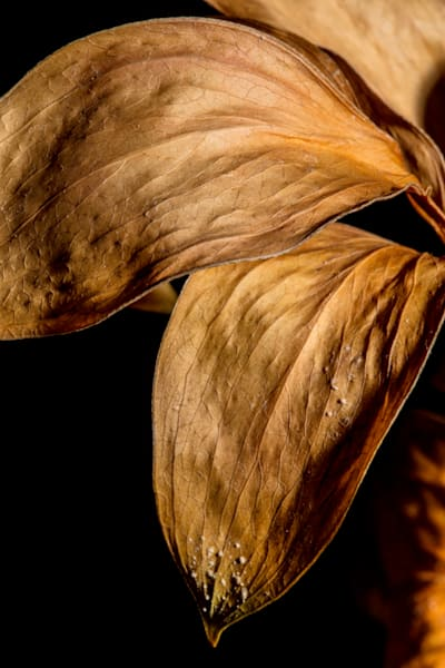 Faded Love Fading Fall Leaf Art Print 1740.12