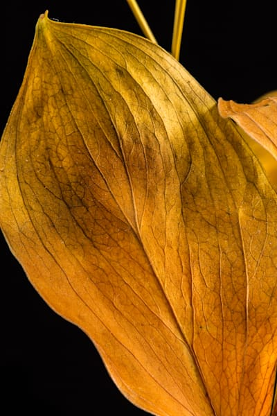 Fall Faded Love Golden Leaf Wall Art 1740.05