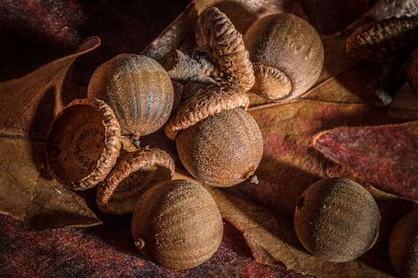 Art Photographs of Classic Farm Nuts Close up Micro