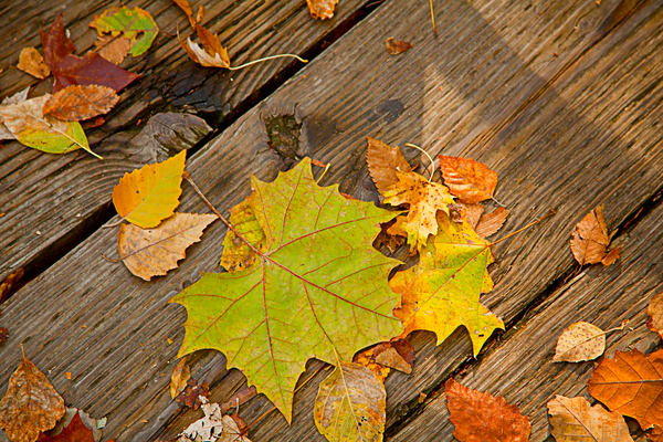 Fall Leaves on Old Board Wall Art 6701.25