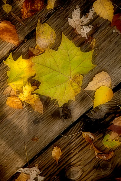 Soft Autumn Leaves on Wood Wall Art 1400.05