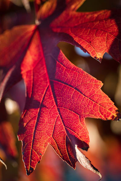 Fall Color Leaf Wall Art 5528 10