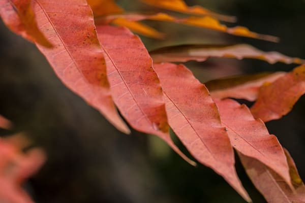 Red Fall Color Tree Leaves Wall Art 5528 31