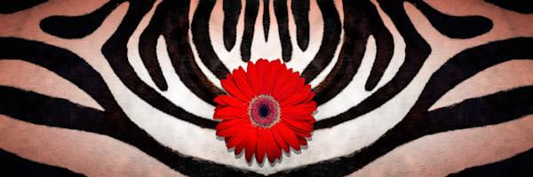 animal kingdom, images of zebra skins and stripes, art photographs of Gerber daisy flowers,