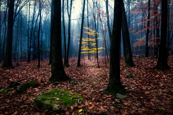 art photographs of misty forest, images of fog and mist, foggy landscapes and pictures,