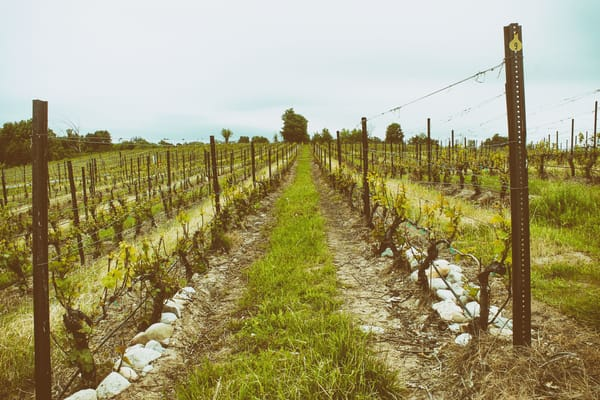 Two Vines