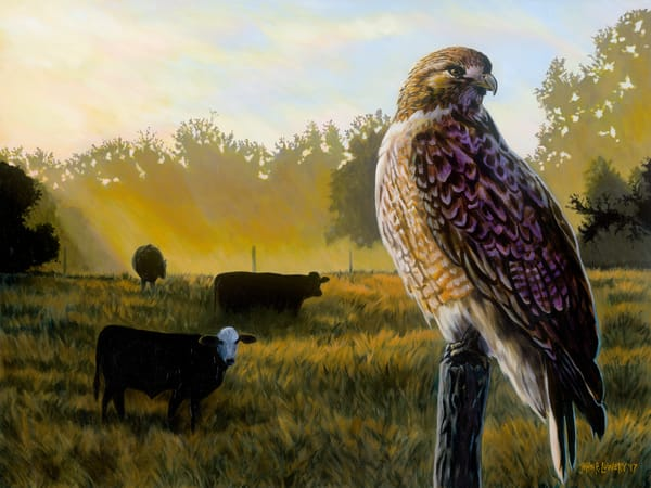Painting of a hawk on a fence post with a pasture in the background, for sale as art prints.
