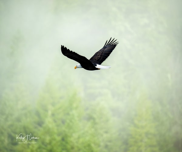 Soaring Photography Art | Images2Impact