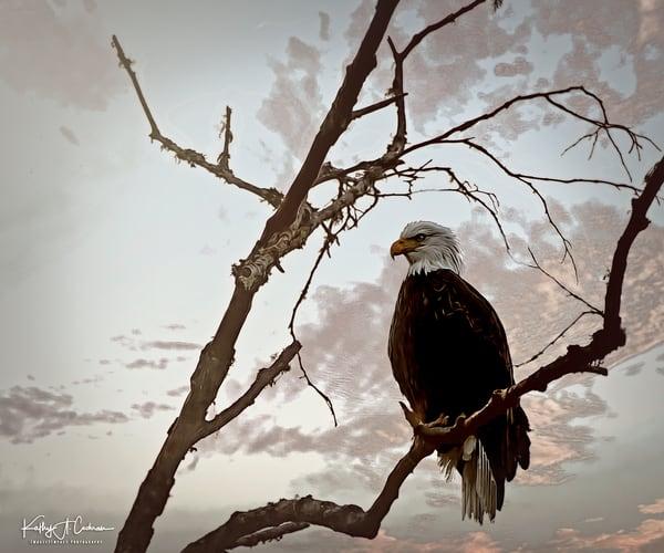 Surveillance Photography Art | Images2Impact