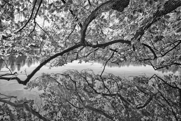 Still Reflection