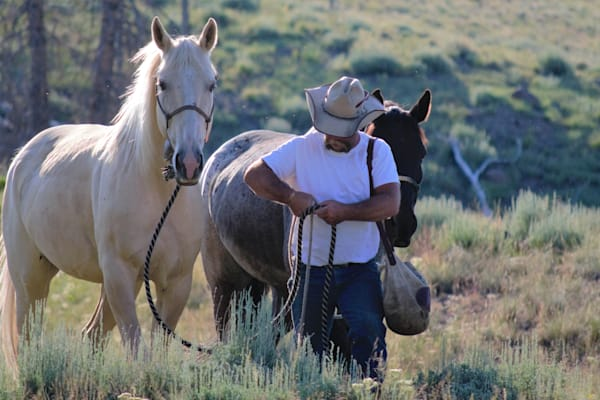 Photograph of a packer catching horses for sale as Fine Art