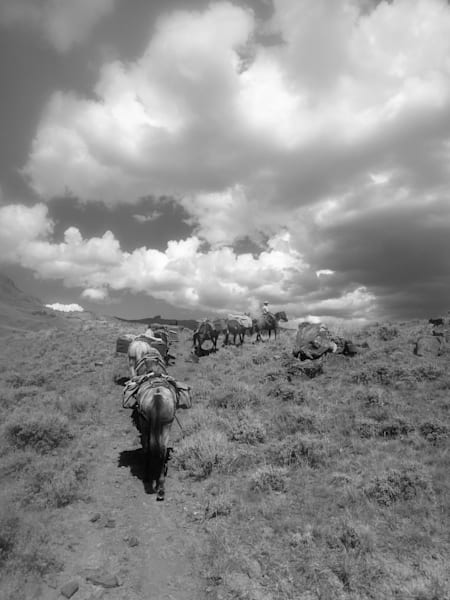 Black and White Photograph of a pack string near Jack Creek Trailhead for sale as Fine Art