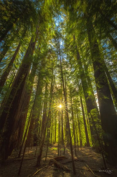 Redwood Sunset Photographic Art