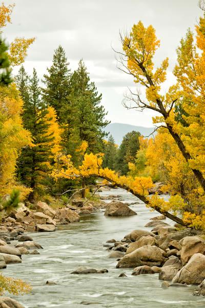 A lonely limb reaches out over  the Arkansas River, Buena Vista, Colorado
