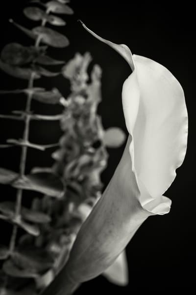 Black and White Lily Flower Wall Art  8007.02