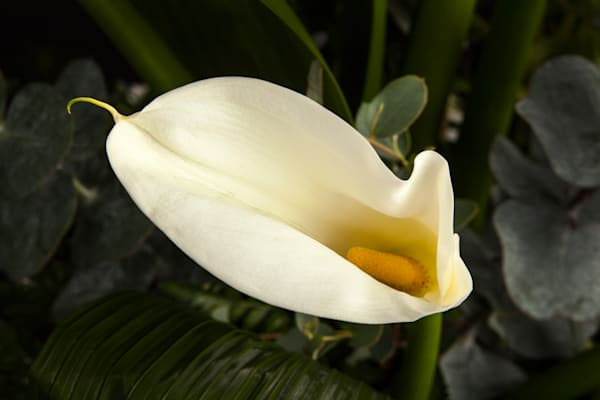 Lilly Plant 8006.02