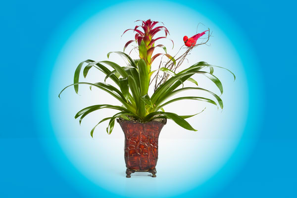 Flower Arrangement Plant Bloom 8034.02