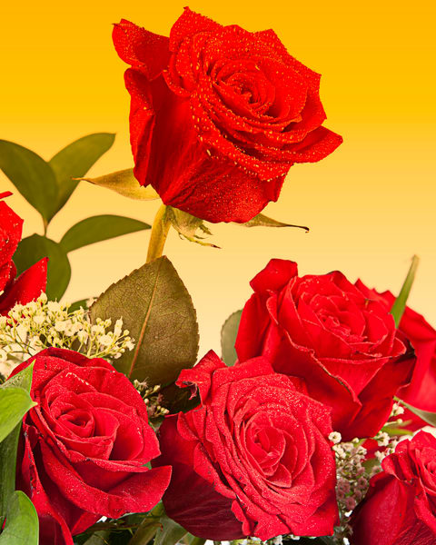 Roses at Sunset Flower Arrangement 6010.02