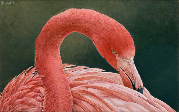 Cynthia Fjelstad Fine Art Prints | Home Decor | Wall Art | Birds