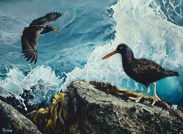 Prince of Tides Oyster Catcher