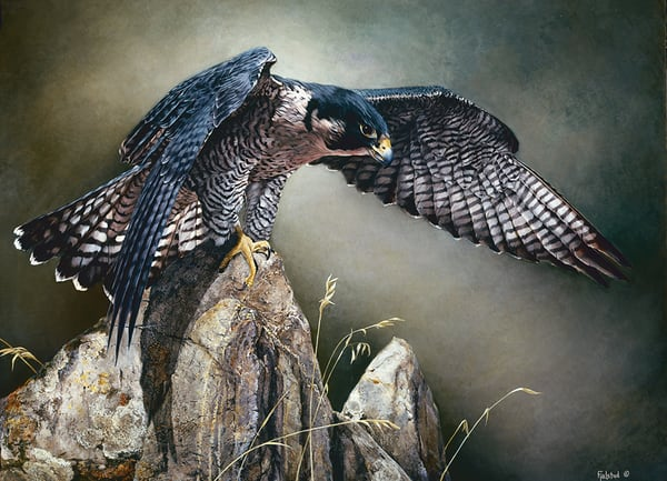 Talisman Pelegrine Falcon