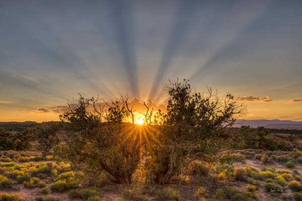 The Burning Bush of Zion