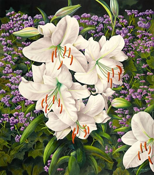 White Lillies fine art print by Jim Dolan.