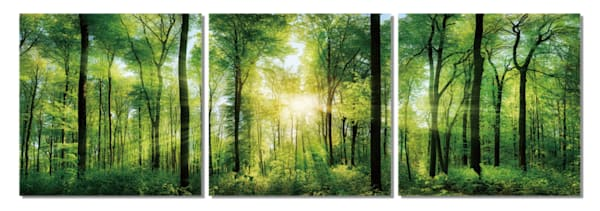 Botanical art, multi piece tree photography, 3 piece tree wall art