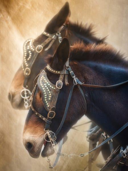 Western-Art, Mules, Horses