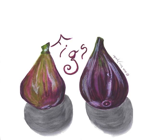 Watercolor painting of figs