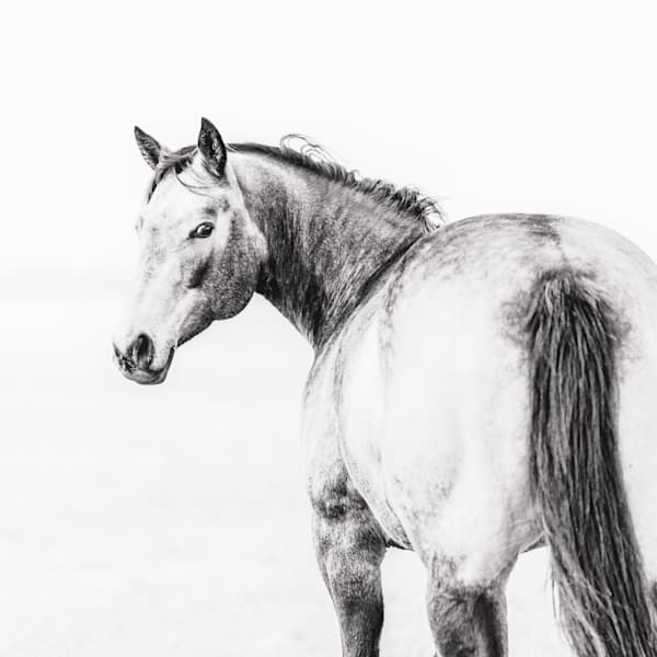 Horses, Black and White Horse Picture