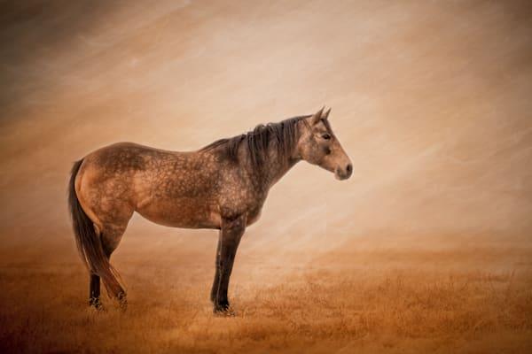 Horses, Dappled-Buckskin, Equine-Fine-Art