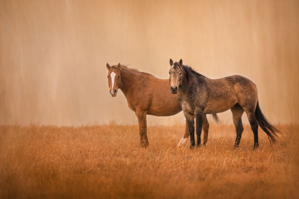 Horses, Boogs-and-Honey, Quarter-Horse-Picture