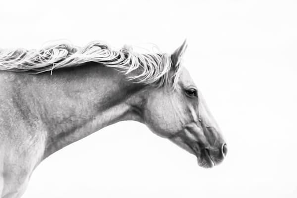 horses, equine-fine-art, quarter-horse-pictures