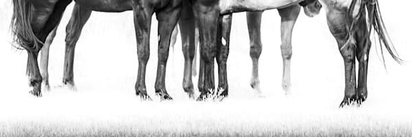 Horses, Equine-Fine-Art, Black-and-White-Horse-Picture